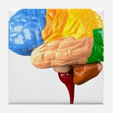 Human brain anatomy, artwork Tile Coaster