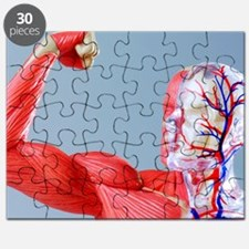 Human body, anatomical model Puzzle