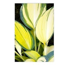 Hosta 'Remember Me' Postcards (Package of 8)