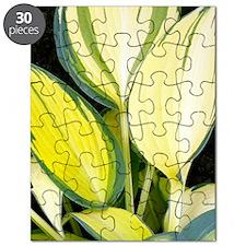 Hosta 'Remember Me' Puzzle