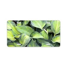 Hosta 'June' Aluminum License Plate
