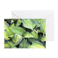 Hosta 'June' Greeting Card