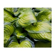 Hosta 'Stained Glass' Throw Blanket