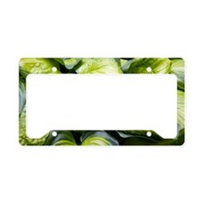 Hosta 'Stained Glass' License Plate Holder
