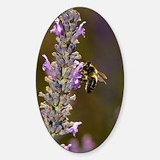 Honey bee pollinating flowers Sticker (Oval)