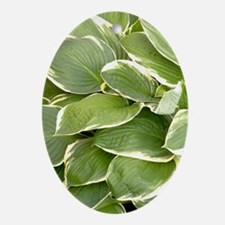 Hosta 'Francee' Oval Ornament