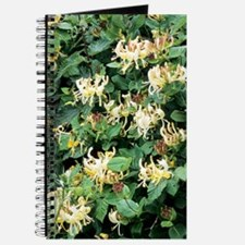 Honeysuckle (Lonicera periclymenum) Journal