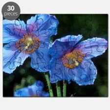 Himalayan poppy (Meconopsis grandis) Puzzle