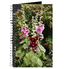 Hollyhock (Alcea rosea) Journal