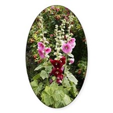 Hollyhock (Alcea rosea) Decal