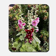Hollyhock (Alcea rosea) Mousepad