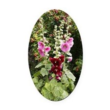 Hollyhock (Alcea rosea) Oval Car Magnet