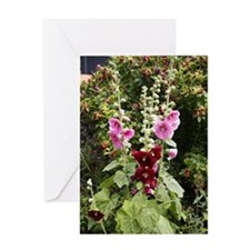 Hollyhock (Alcea rosea) Greeting Card