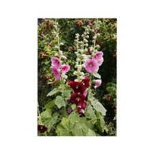 Hollyhock (Alcea rosea) Rectangle Magnet