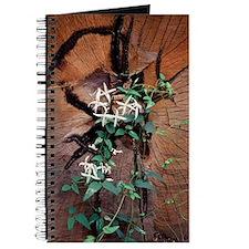 Honeysuckle (Lonicera sp.) Journal