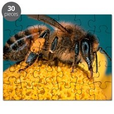 Honey bee on flower Puzzle