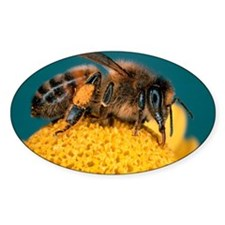 Honey bee on flower Decal
