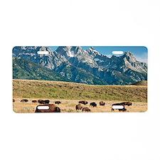 Herd of American Bison Aluminum License Plate