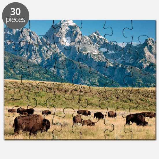 Herd of American Bison Puzzle