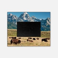Herd of American Bison Picture Frame