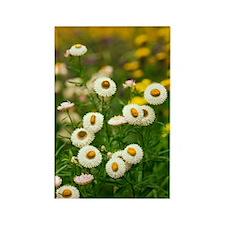 Helichrysum breacteatum Rectangle Magnet