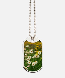 Helichrysum breacteatum Dog Tags