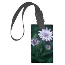Helichrysum 'Large Flowered Mixe Luggage Tag