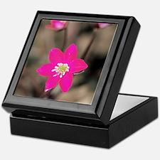 Hepatica (Hepatica gyousia) Keepsake Box