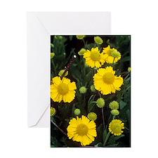 Helenium 'Goldene Jugend' Greeting Card
