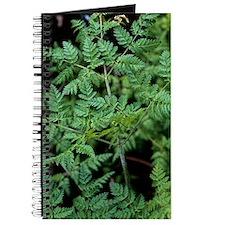 Hemlock (Conium maculatum) Journal