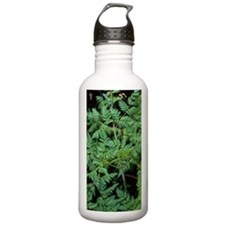 Hemlock (Conium macula Water Bottle