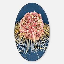 HeLa cell, SEM Decal