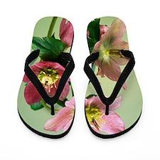 Hellebore flowers Flip Flops