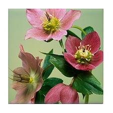 Hellebore flowers Tile Coaster