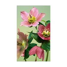 Hellebore flowers Decal