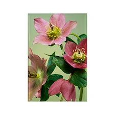 Hellebore flowers Rectangle Magnet