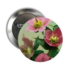 "Hellebore flowers 2.25"" Button"