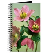 Hellebore flowers Journal