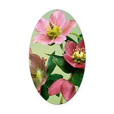 Hellebore flowers Oval Car Magnet