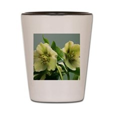 Hellebore flowers Shot Glass