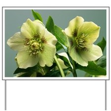 Hellebore flowers Yard Sign