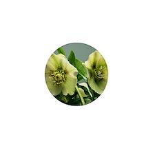 Hellebore flowers Mini Button