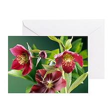 Hellebore flowers Greeting Card