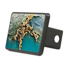 Helicobacter pylori bacter Hitch Cover