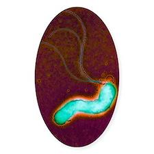 Helicobacter pylori bacterium Decal