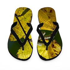 Hazel (Corylus avellana) Flip Flops