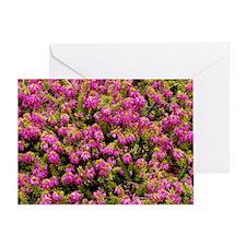 Heather 'King George' flowers Greeting Card