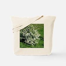 Hawthorn (Crataegus oxyacantha) Tote Bag