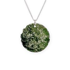Hawthorn (Crataegus oxyacant Necklace