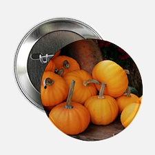 "Harvested pumpkins 2.25"" Button"